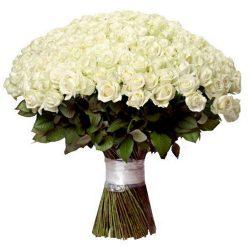 картинка 201 белая роза