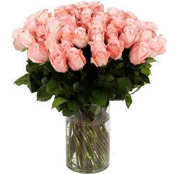 Роза импортная розовая (поштучно)
