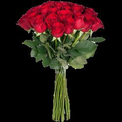 товар Троянда екстра класу (поштучно)