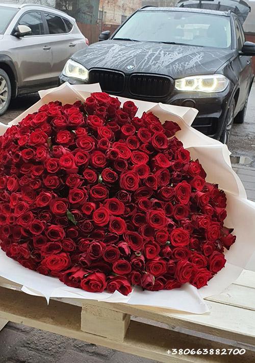 фото 201 красная роза